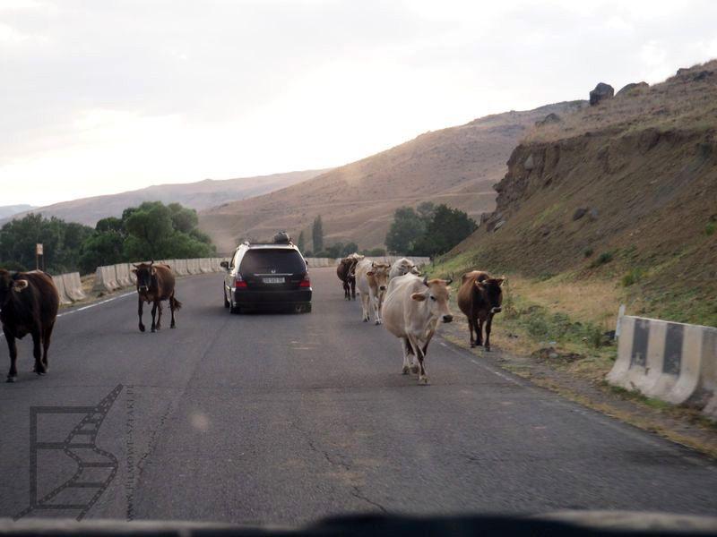 Wymijanie krów (Gruzja na własną rękę)