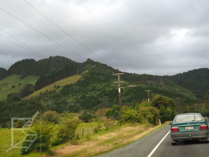Przejazd przez Coromandel Forest Park (Nowa Zelandia na własną rękę)