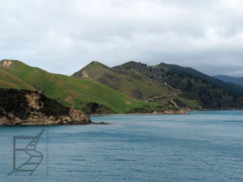 Zatoki przy Picton (Nowa Zelandia na własną rękę)