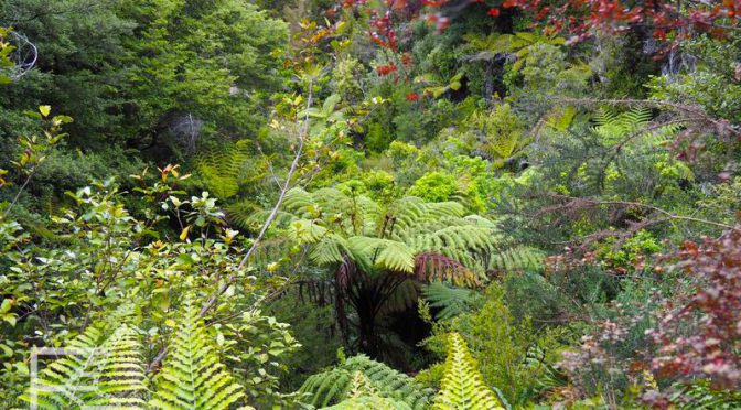 Park Narodowy Abel Tasman w Nowej Zelandii
