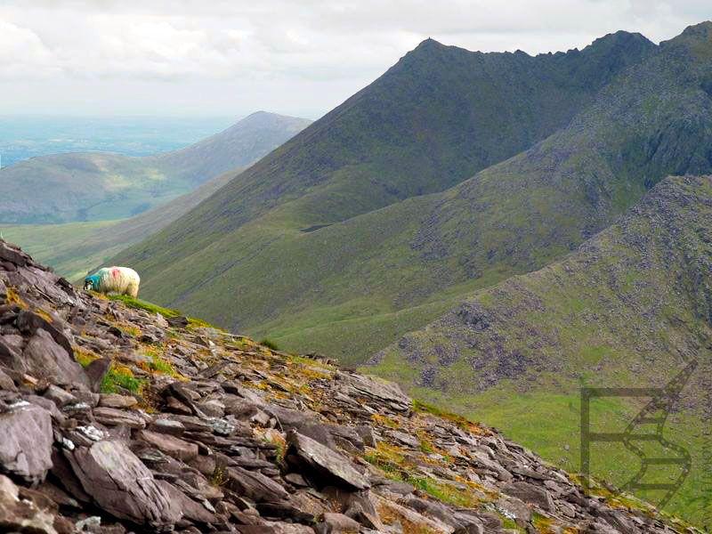 Widok na Macgillycuddy's Reek / Czarne szczyty / Na Cruacha Dubha