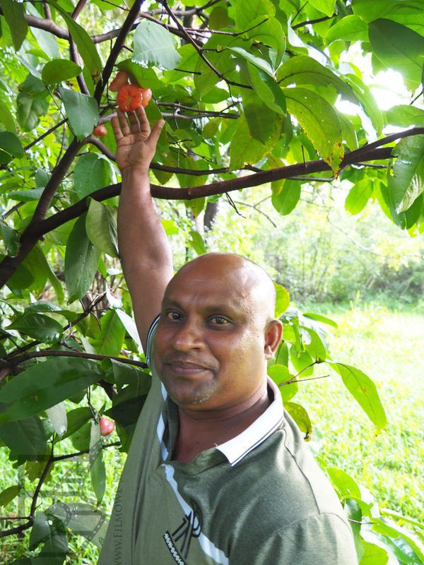 Malith, nasz kierowca i przewodnik podczas zrywania owoców dla nas