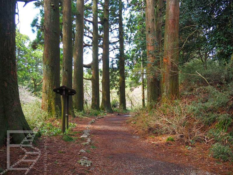 Droga Tōkaidō w Hakone słynie z  wiekowych cyprysów