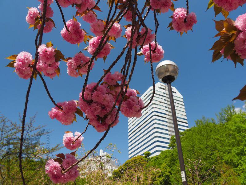Tokio zaskakuje dużą ilością terenów zielonych