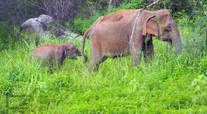 Hurulu Eco Park, czyli safari po lankijsku