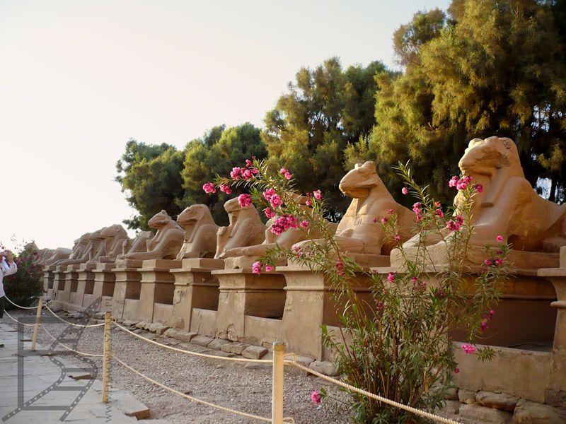 Sfinksy, Luksor