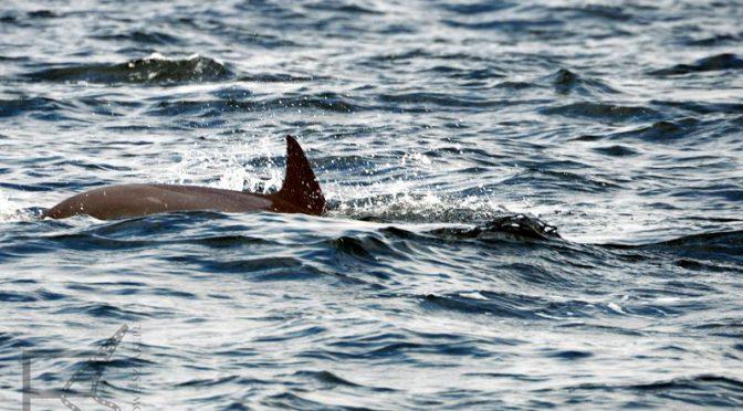 Zatoka Omańska i oglądanie delfinów
