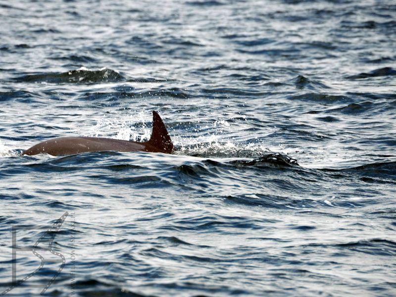 Delfin, rejs po Zatoce Omańskiej