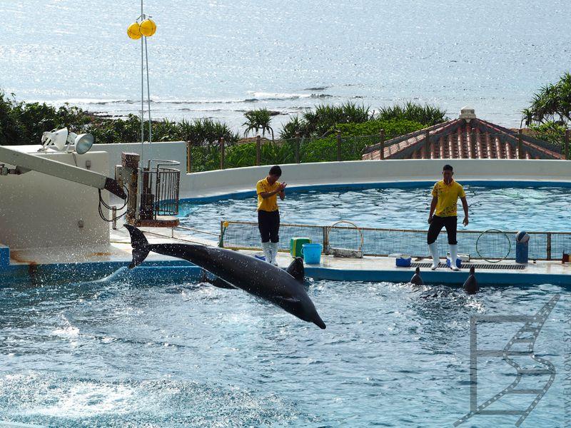 Pokazy delfinów