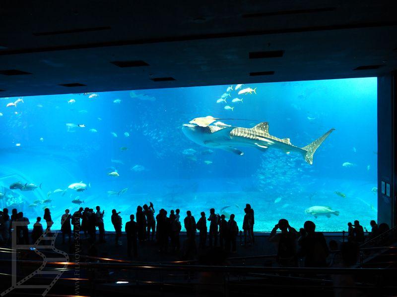 Basen z rekinami wielorybimi, Churaumi Aquarium, Okinawa