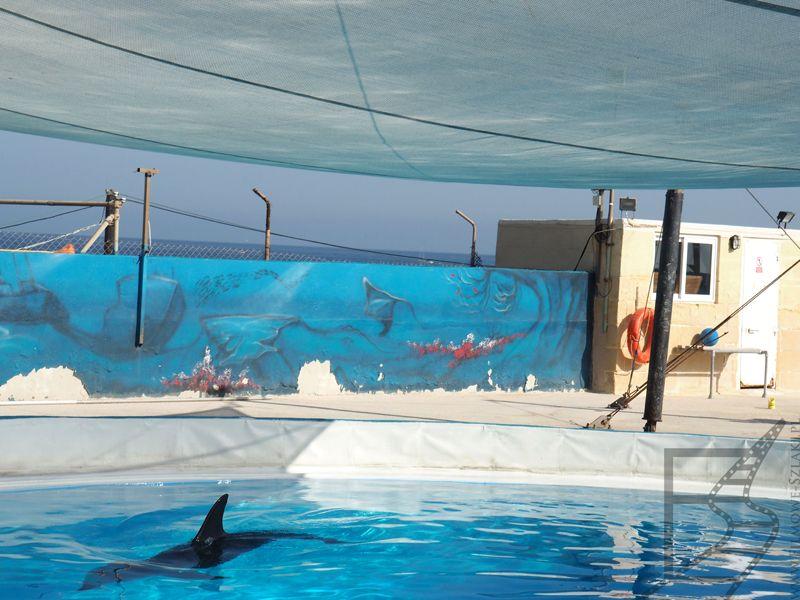 Delfin w Mediterraneo Marine Park