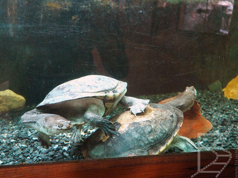Żółwie w Mediterraneo Marine Park