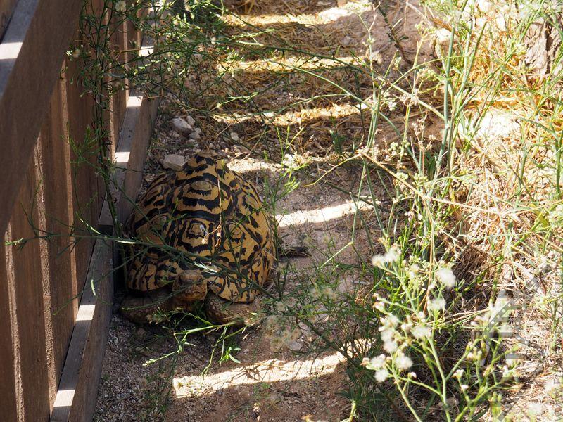 Żółw w Mediterraneo Marine Park