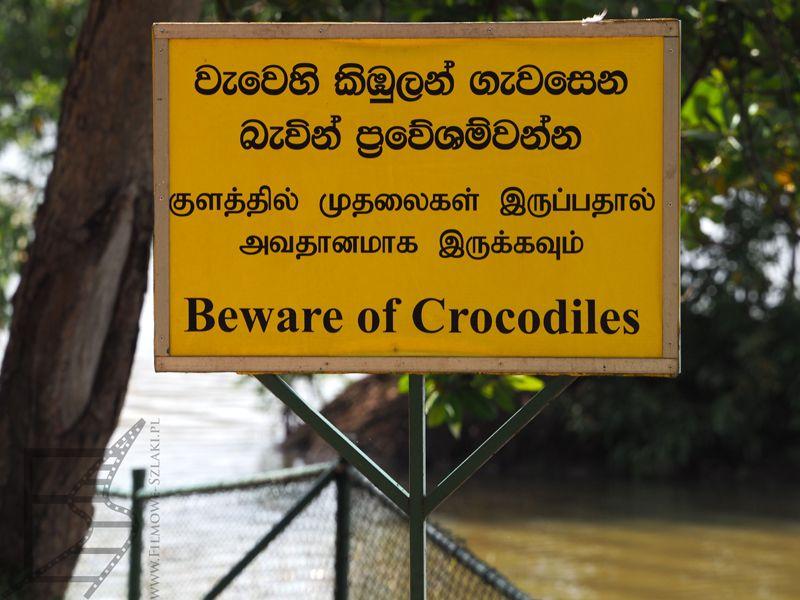 Uwaga na krokodyle, znak przed parlamentem