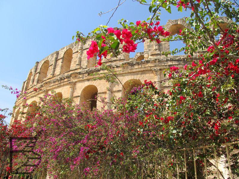 Kwiaty przy amfiteatrze