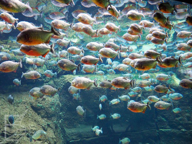 Oceanarium w Kopenhadze