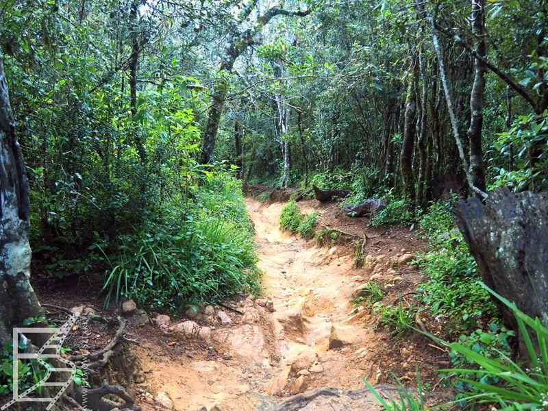 Las Mglisty (Płaskowyż Hortona)