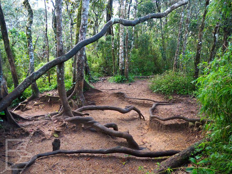 Płaskowyż Hortona i ścieżka w lesie