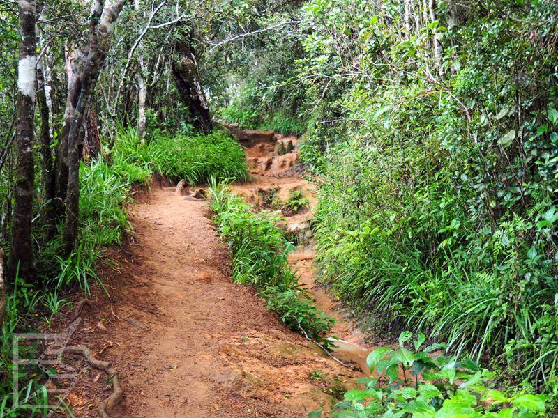 Droga w lesie mglistym