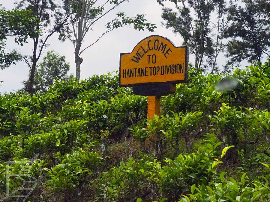 Pola herbaciane, Hantana