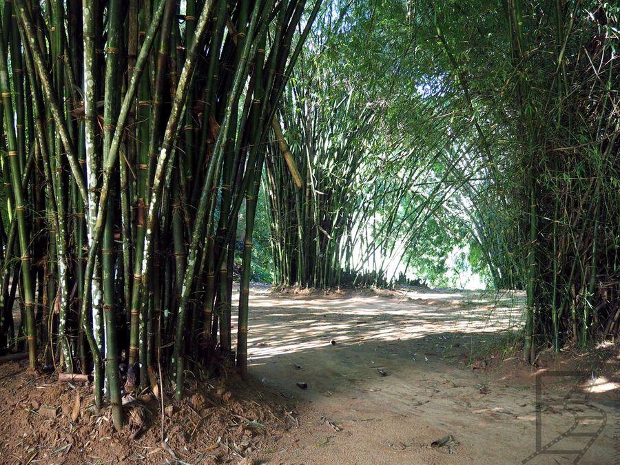 Peradeniya, Królewski Ogród Botaniczny w Kandy