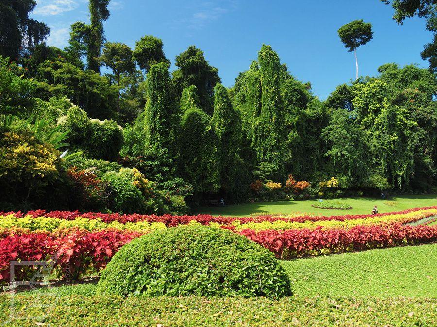 Królewski Ogród Botaniczny w Kandy