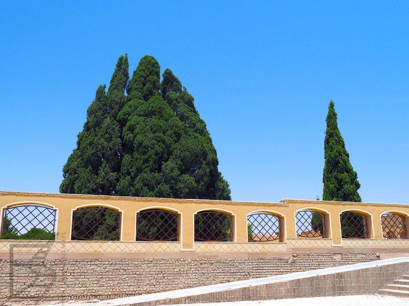 Cyprys liczący sobie ponad 4 tysiące lat