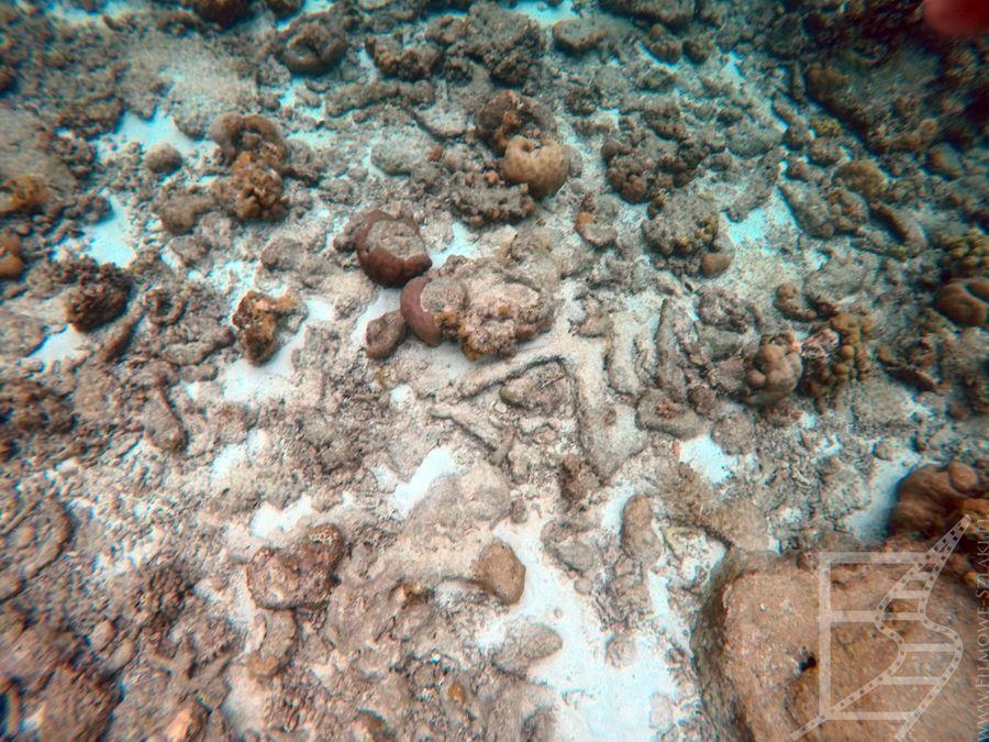 Malediwska rafa, atol Laamu