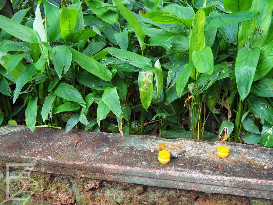 Matale, ogród przyprawowy
