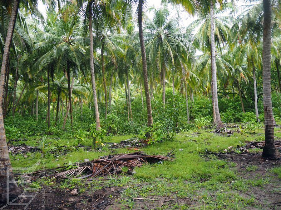 Dżungla na wyspie Baresdhoo
