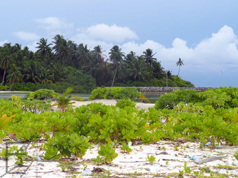 Oryginalna roślinność