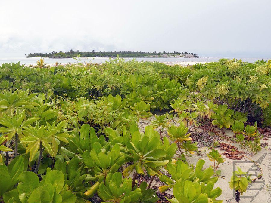 Zarośnięta plaża na Gasfinolhu