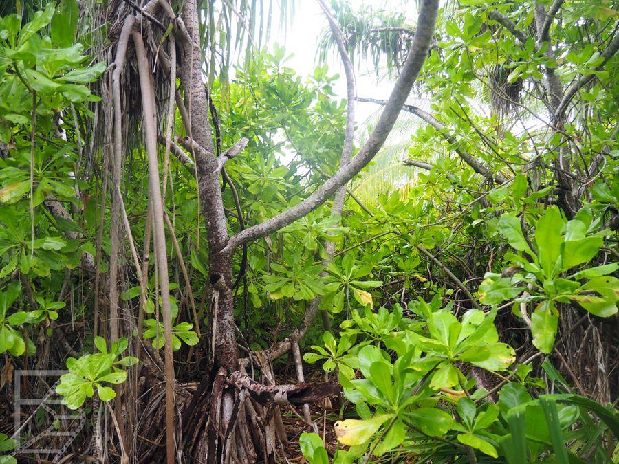 Dżungla na bezludnej wyspie (Malediwy, Atol Laamu)