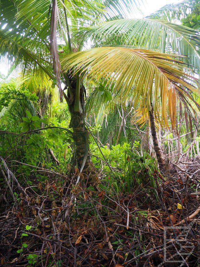 Lokalna roślinność