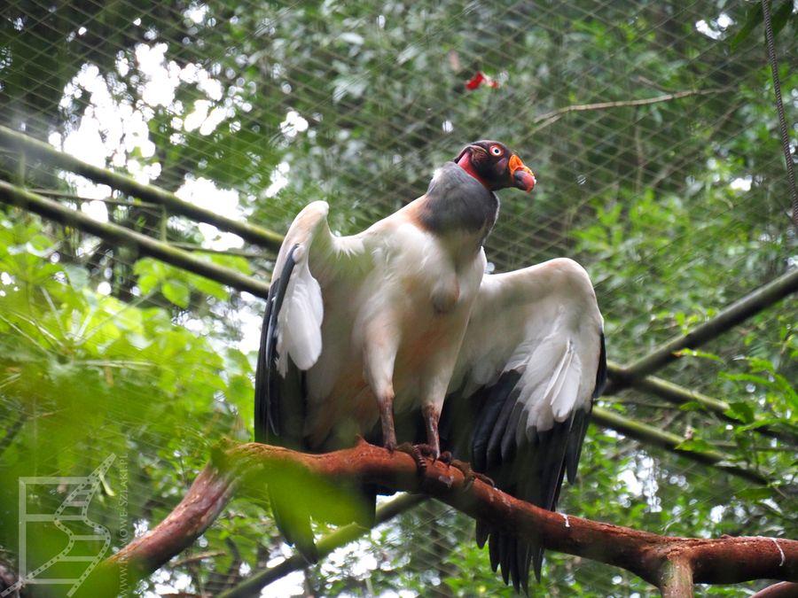 Park Ptaków