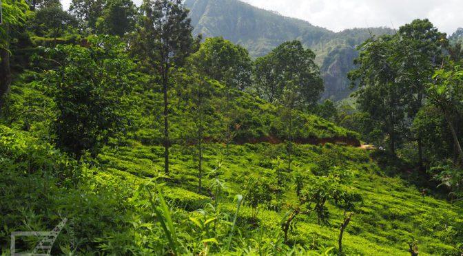 Ella, herbaciane pola i Mały Szczyt Adama