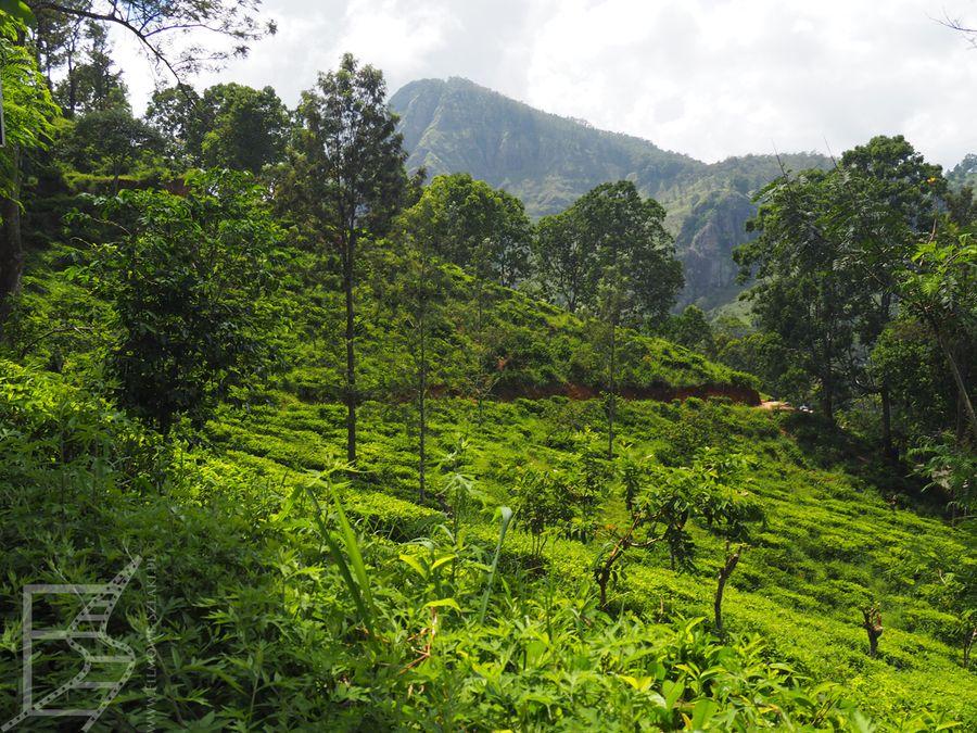 Pola herbaciane przy drodze na Mały Szczyt Adama (Ella)