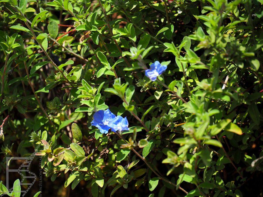 Kwiaty pośród krzewów