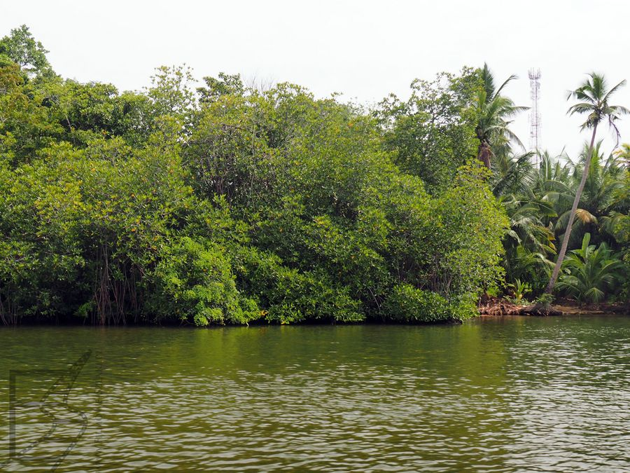 Krajobraz Madu Ganga