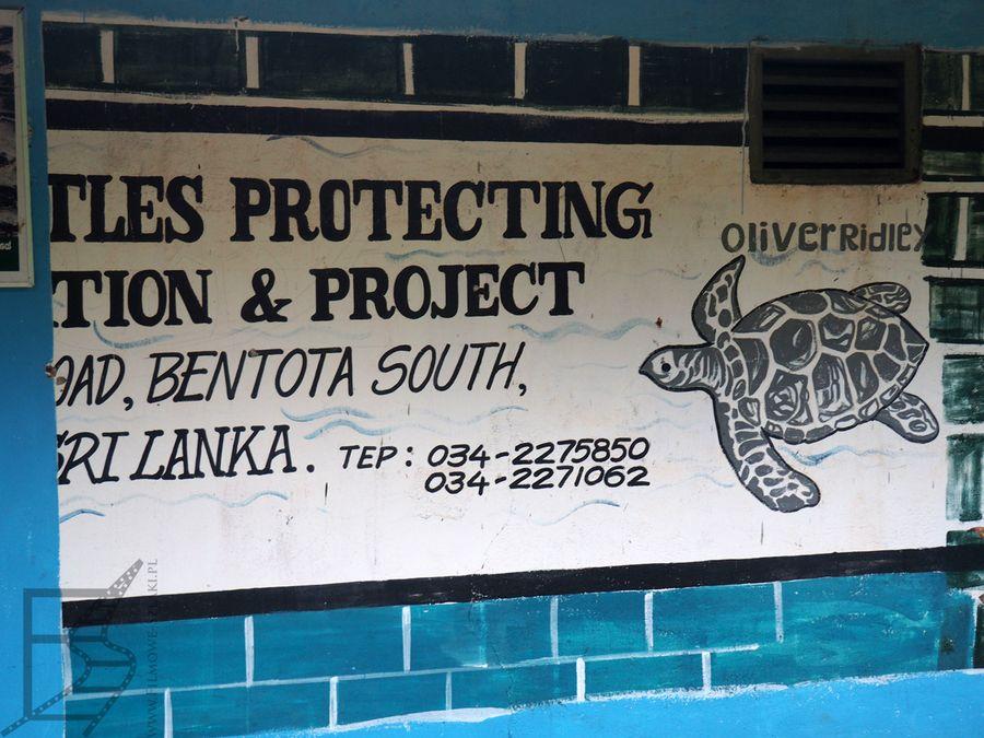 Wylęgarnia żółwi w Kosgoda