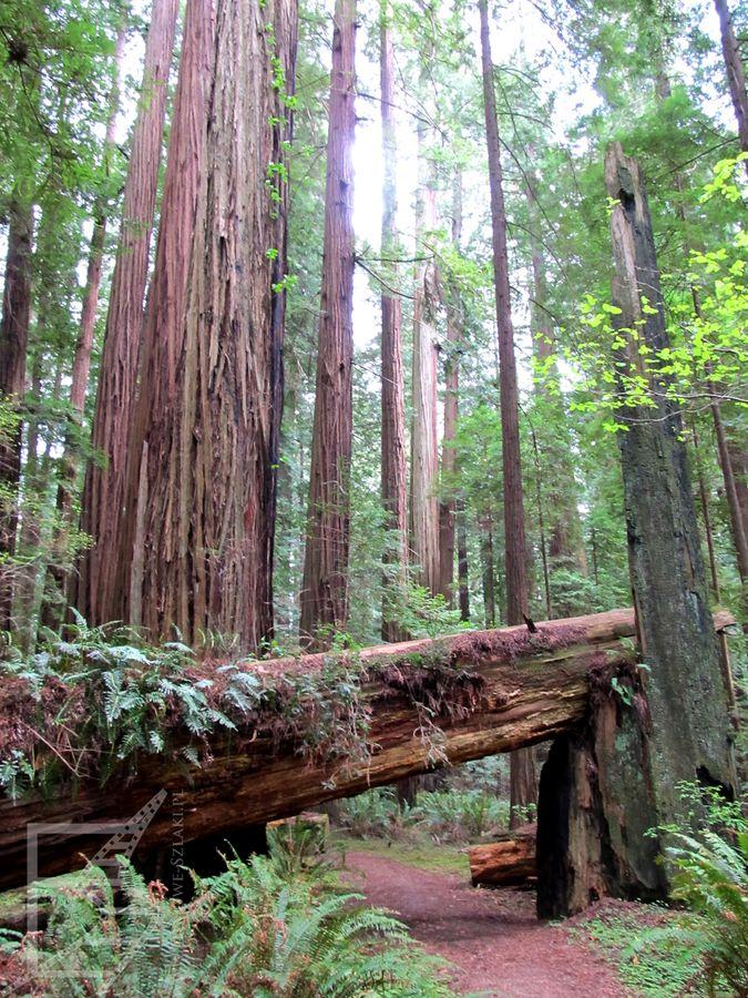 Trasa wśród drzew