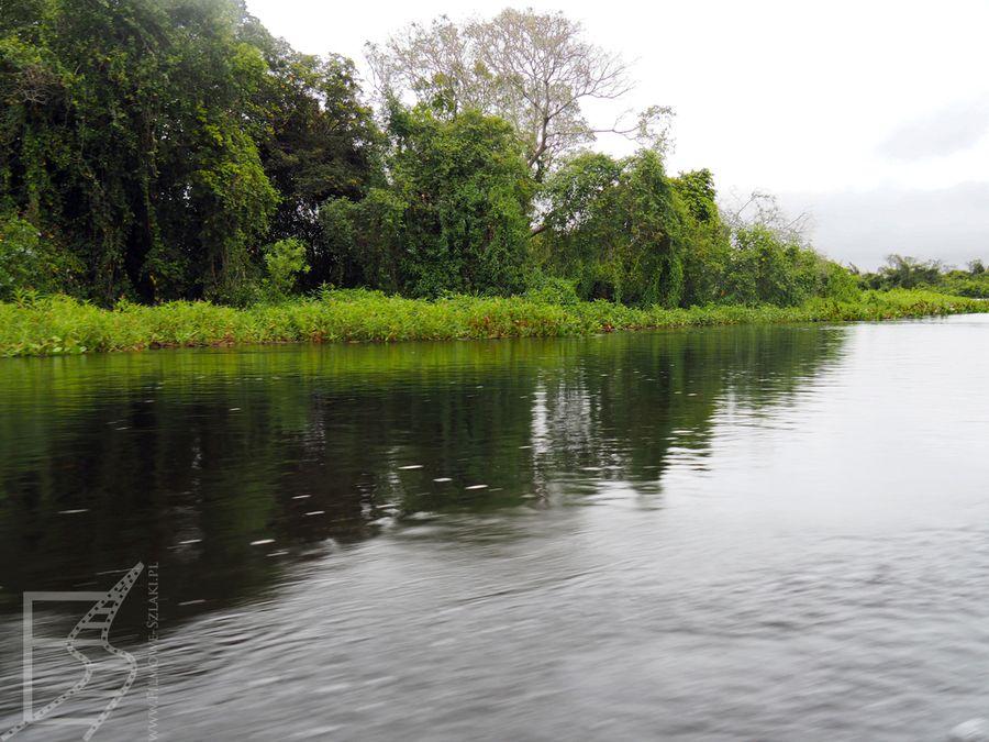 Pantanal widziany z łodzi