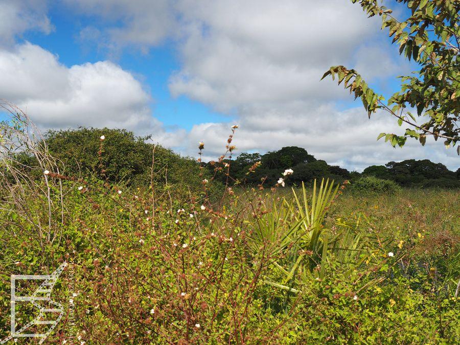 Spacerem przez Pantanal