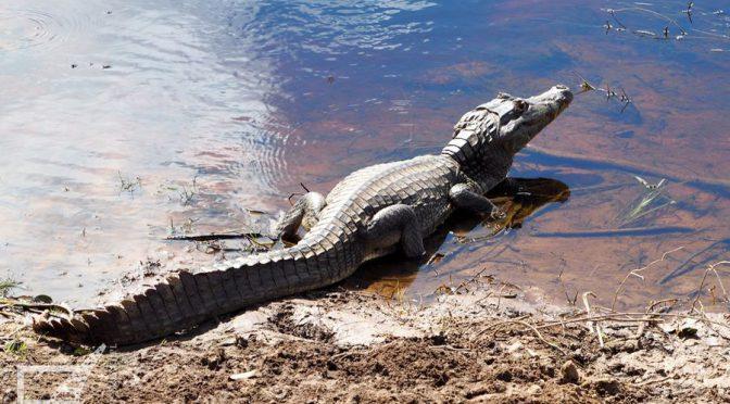 Pantanal, największe bagno świata