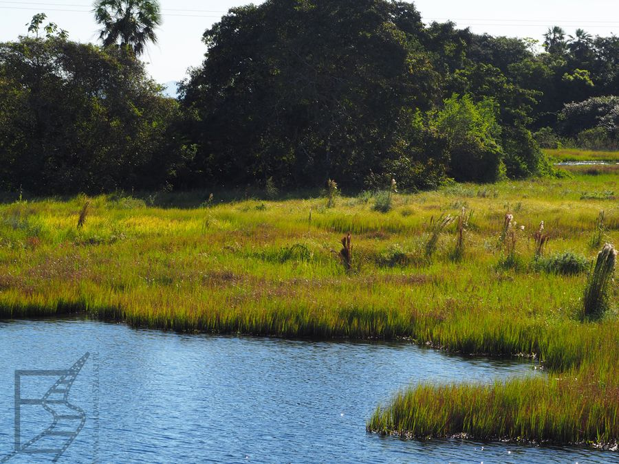 Krajobraz Pantanalu