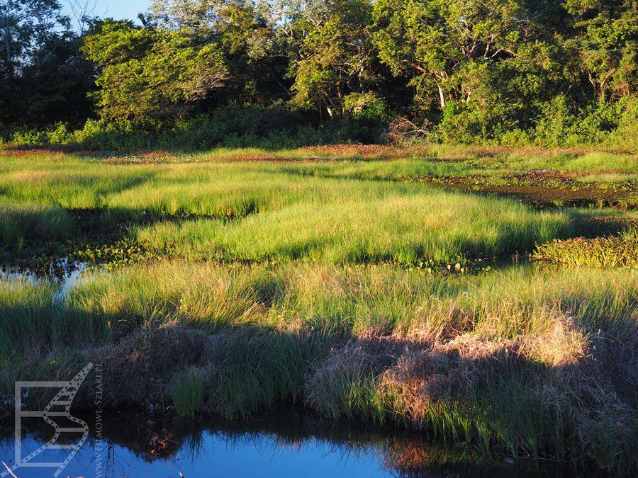 Pantanal i typowy krajobraz