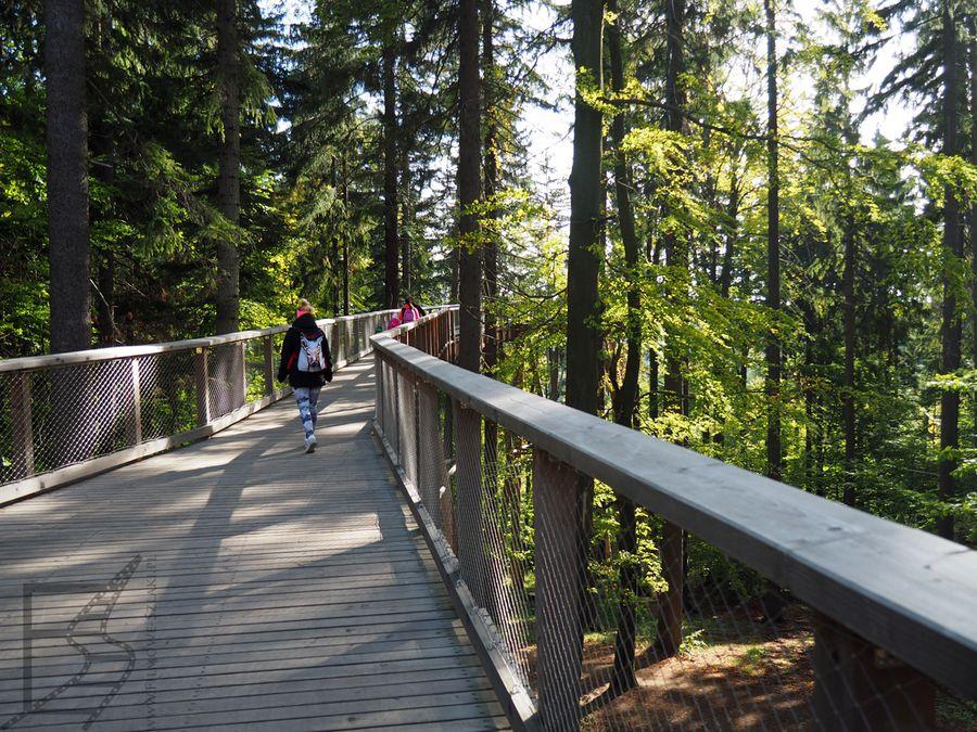 Ścieżka w koronach drzew, początek trasy