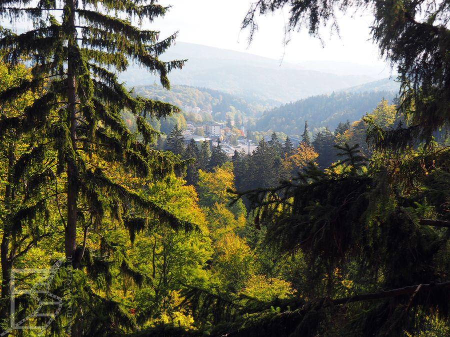Widok na las i góry