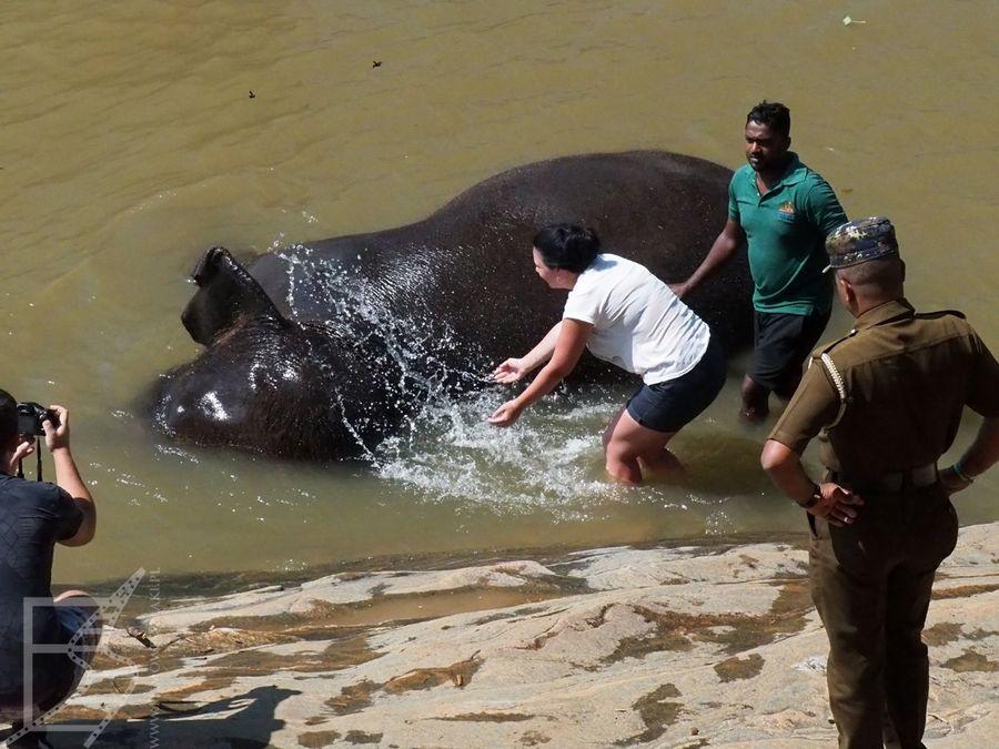 Pinnawala i mycie słoni indywidualne (dodatkowo płatna atrakcja)