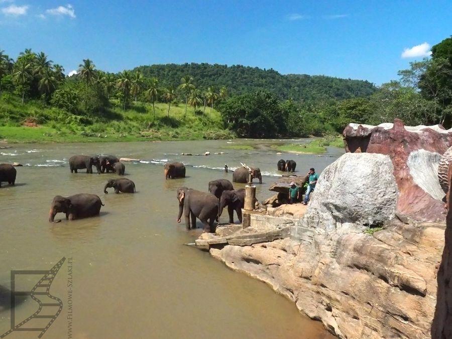 Rzeka Maha Oya (Pinnawala)